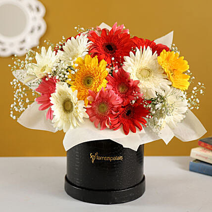 Mixed Brilliance Gerbera Blossoms Box