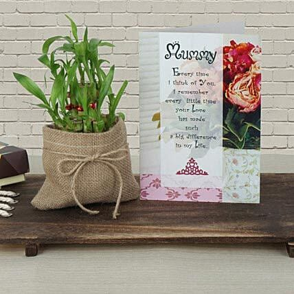 Mothers Day Lucky bamboo in pot and greeting card combo