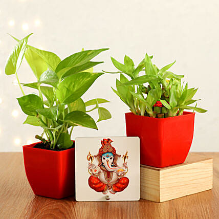 Online Plant With Spritual Combo:Diwali Table Tops