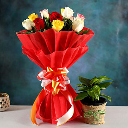 Buy Money Plant And Rose Bouquet