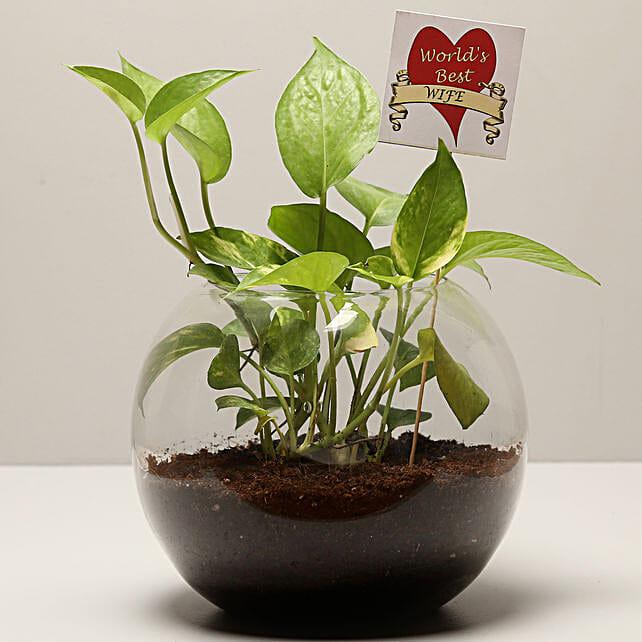 money plant for karwa chauth