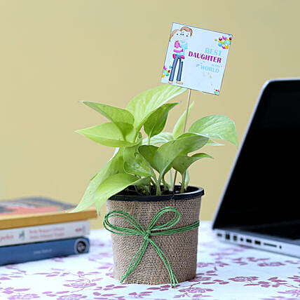 Online Money Plant For Daughter's Day