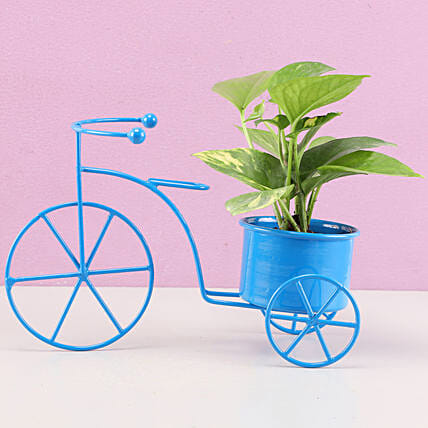 money plant in cycle shape planter