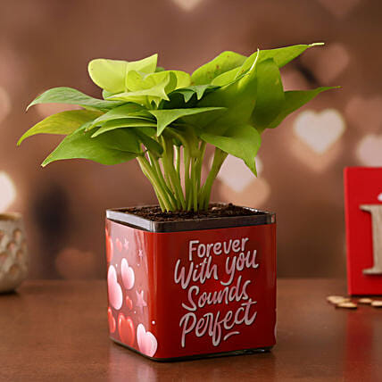 Money Plant in Valentines Glass Vase:Buy Valentine's Week gifts