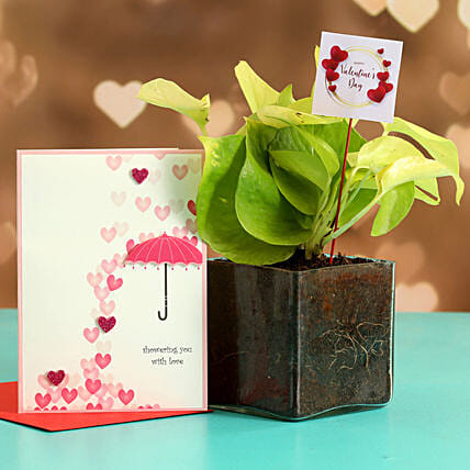 Money Plant In Glass Vase With Greeting Card V Day Tag