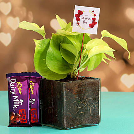 Money Plant In Glass Vase With V Day Tag Cadbury Fruit N Nut