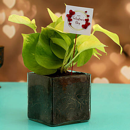 Money Plant In Glass Vase With V Day Tag
