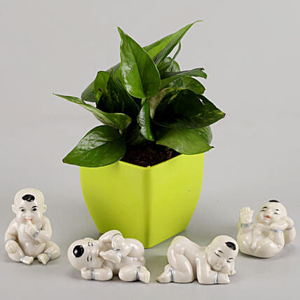 plant with show piece online