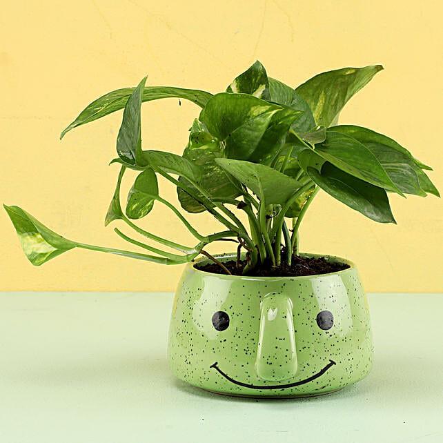 Online Money Plant In Unique Pot