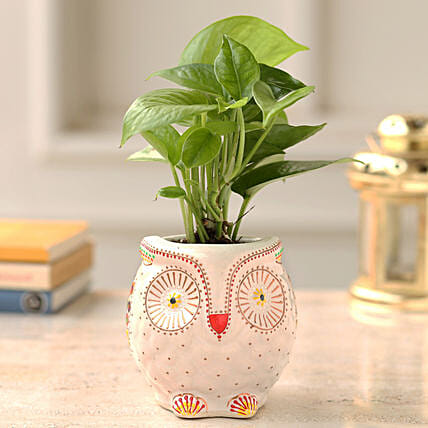 Online Money Plant   Owl Planter