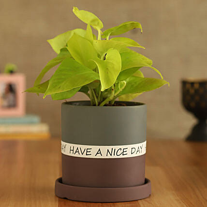 Money Plant In Have A Nice Day Purple Plate Pot