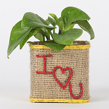 Love Printed Pot with Plant Online