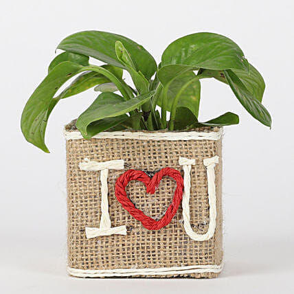 Love Pot Plant for Valentine Online