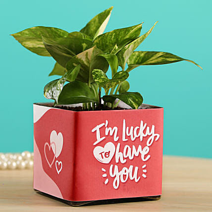 Money Plant In Lucky To Have You Glass Pot:Potted Plants