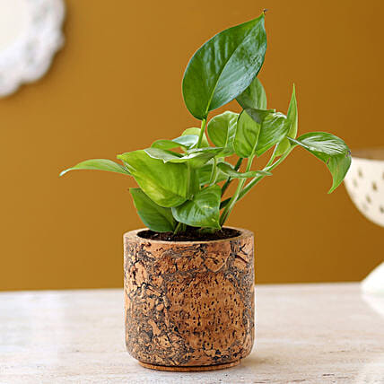 Money Plant In Pipe Shape Cork Pot