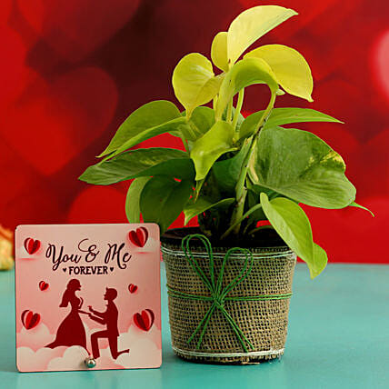 Money Plant In Plastic Pot & Printed Table Top Hand Delivery