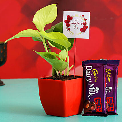 Money Plant In Plastic Pot With V Day Tag Dairy Milk
