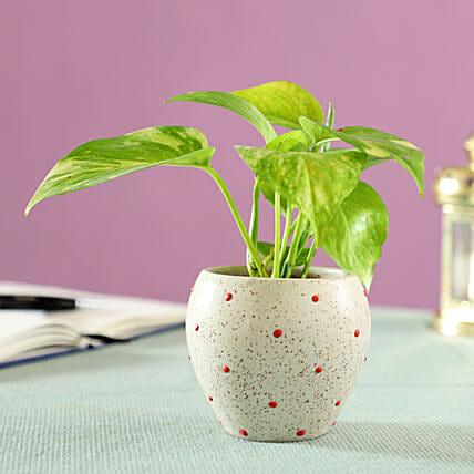 good luck plant for home décor