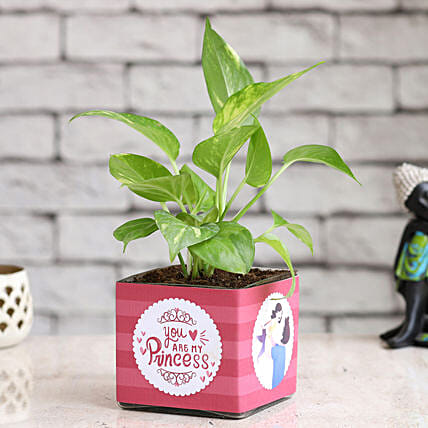 Online Money Plant In Daughter Vase