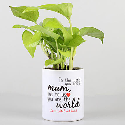 money plant for mothers day