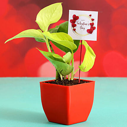 Money Plant In Red Plastic Pot With V-Day Tag Hand Delivery
