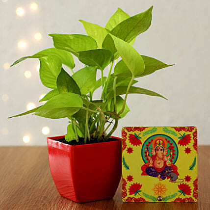 money plant with table top for diwali