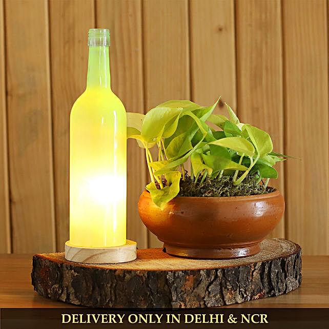Money Plant In Terracotta Pot With Light Bottle