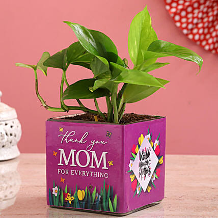 Money Plant In Thank You Mom Glass Vase