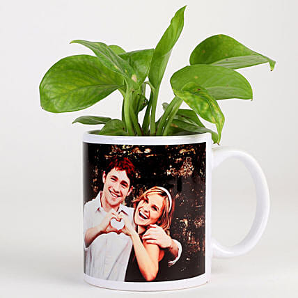 money plant in photo coffee mug
