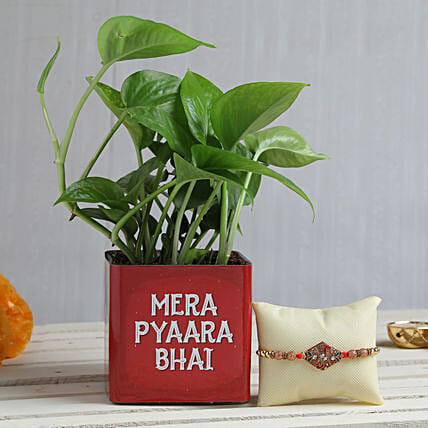 Plant With Rakhi For Bro
