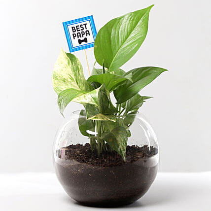 Online Plant for Best Father
