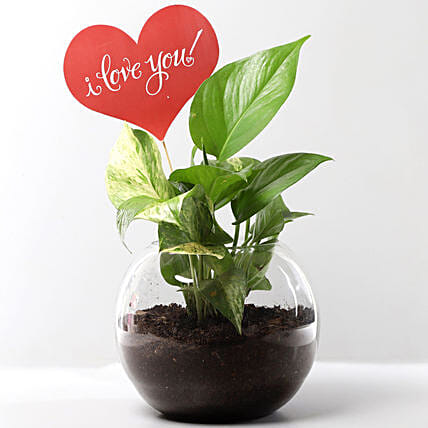 Plant with love Tag Online:Money Tree Plant Delivery