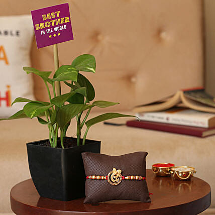Rakhi with Plant Online