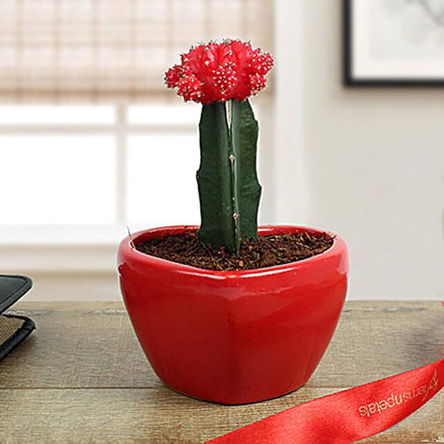 Cactus Flower Online
