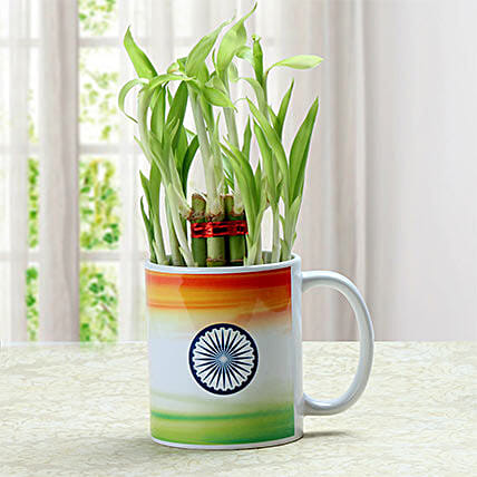 Lucky bamboo with mug