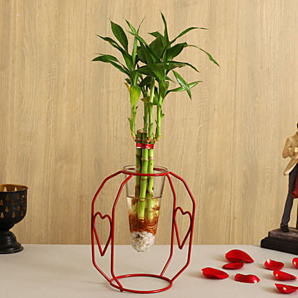 One Layer Bamboo Plant In Clear Cone Heart Stand