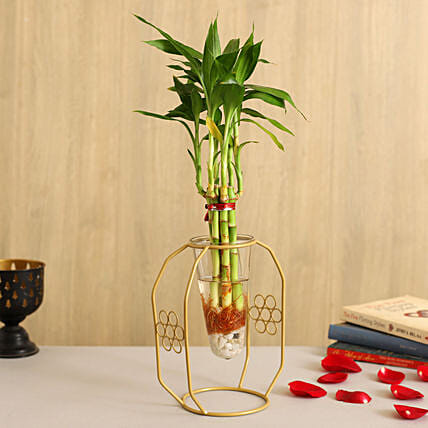 One Layer Bamboo Plant In Clear Cone Yellow Flowery Stand