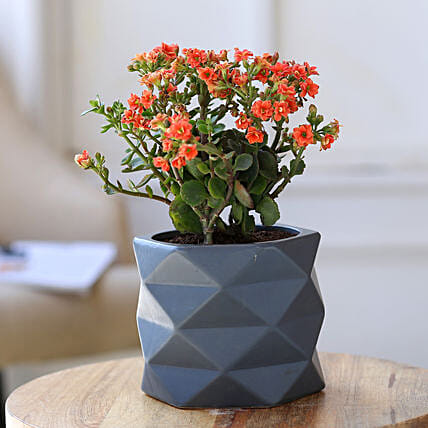Orange Kalanchoe Plant In Triangular Ceramic Plant