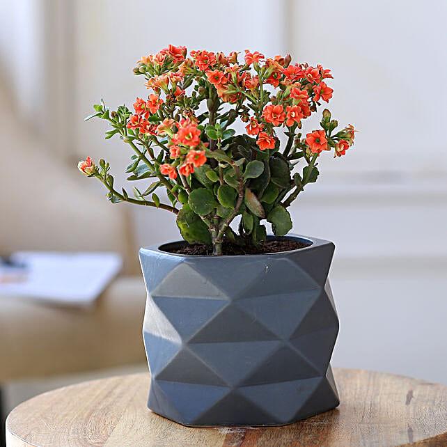 Orange Kalanchoe Plant In Triangular Ceramic Plant:Ceramic Planters