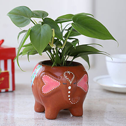 Online Plant In Elephant Shaped Planter