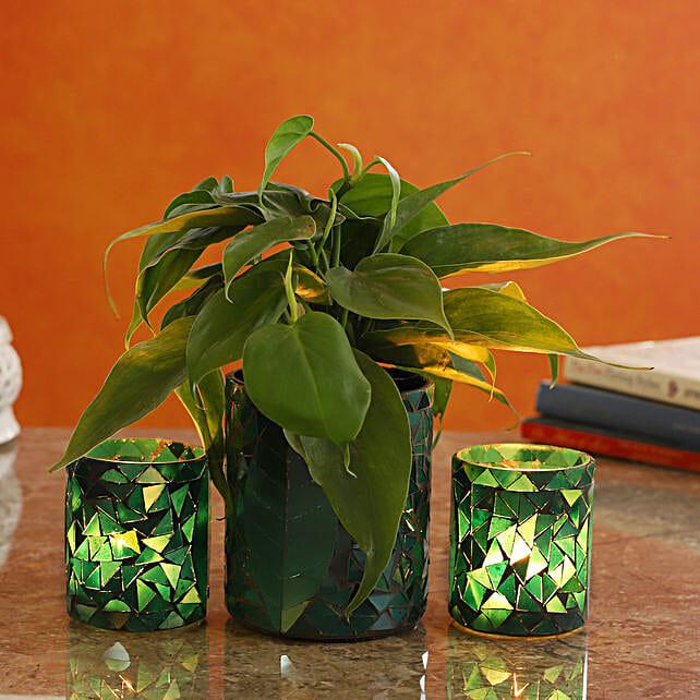 Oxycardium Plant In Leaf Motif Glass Pot And Votive Set