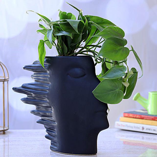 Oxycardium Plant In Side Face Pot