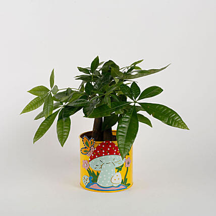Pachira 3 in 1 Bonsai Plant in Yellow Mushroom Metal Planter