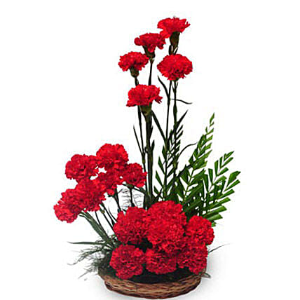 Passionate love - A basket arrangement of 20 red carnations with green fillers.