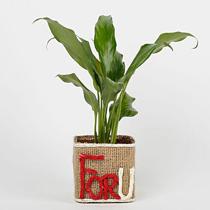 Peace Lilly in Glass Vase For U