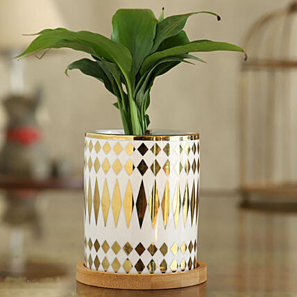 Peace Lily Plant In Abstract Print Pot With Wooden Plate