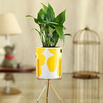 Peace Lily Plant In Flower Print Pot With Golden Stand