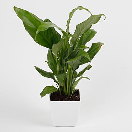 long leaf plant in yellow pot