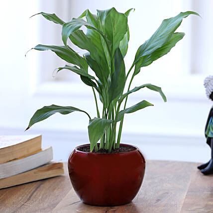 peace lily plant in red metal pot