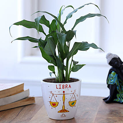 peace lily plant white ceramic planter:Buy Flowering Plants